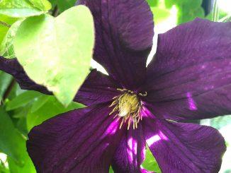 Blume-Verlosung