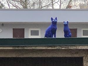 Alltag des Sonderlings: Blaue Katzen